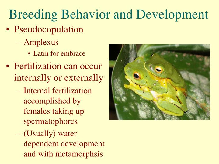 Breeding Behavior and Development