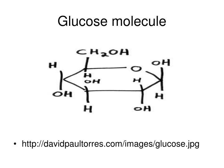Glucose molecule