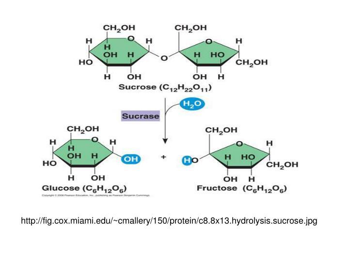 http://fig.cox.miami.edu/~cmallery/150/protein/c8.8x13.hydrolysis.sucrose.jpg
