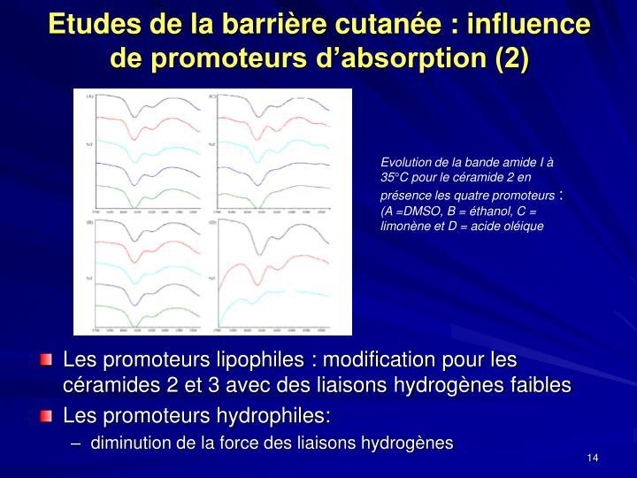 Etudes de la barrière cutanée : influence de promoteurs d'absorption (2)