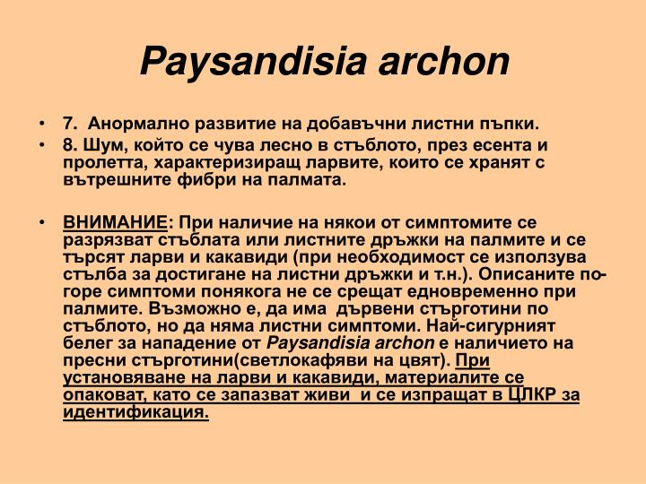 Paysandisia archon