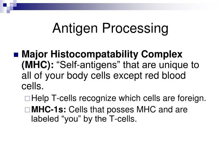 Antigen Processing