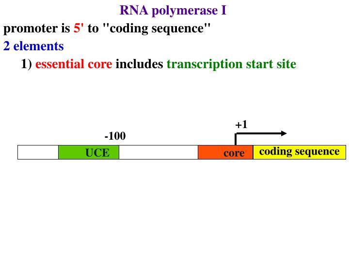 RNA polymerase I