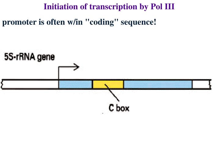 Initiation of transcription by Pol III