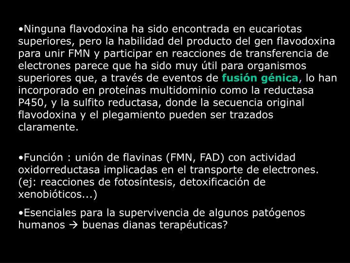 Ninguna flavodoxina ha sido encontrada en eucariotas superiores, pero la habilidad del producto del gen flavodoxina para unir FMN y participar en reacciones de transferencia de electrones parece que ha sido muy útil para organismos superiores que, a través de eventos de