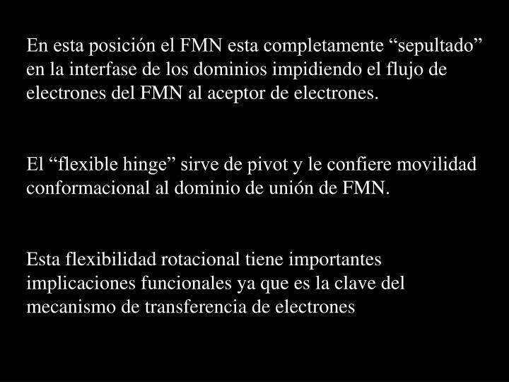 """En esta posición el FMN esta completamente """"sepultado"""" en la interfase de los dominios impidiendo el flujo de electrones del FMN al aceptor de electrones."""