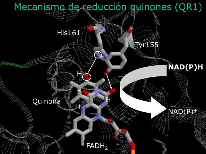 Mecanismo de reducción quinones (QR1)