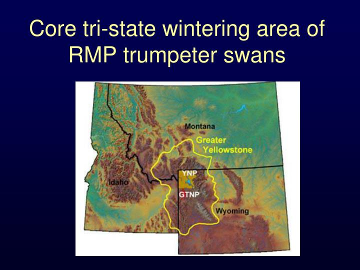 Core tri-state wintering area of RMP trumpeter swans