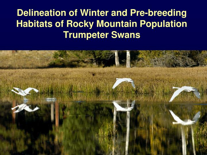 Delineation of winter and pre breeding habitats of rocky mountain population trumpeter swans