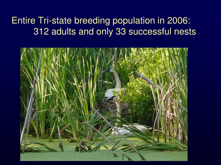 Entire Tri-state breeding population in 2006: