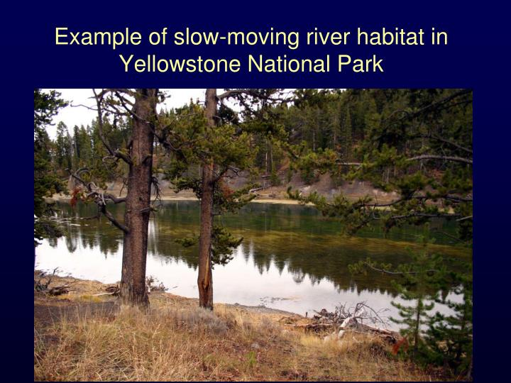 Example of slow-moving river habitat in Yellowstone National Park