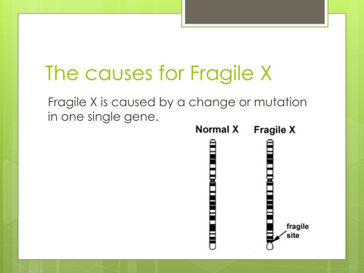 The causes for Fragile X