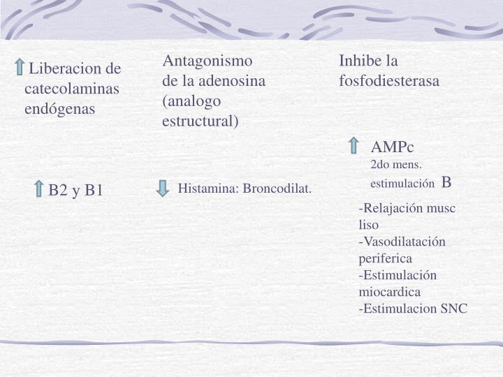 Antagonismo de la adenosina (analogo estructural)