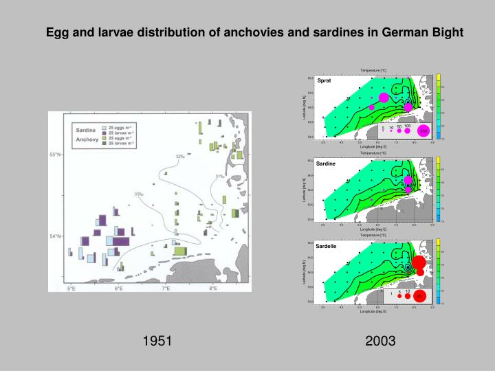 Egg and larvae distribution of anchovies and sardines in German Bight