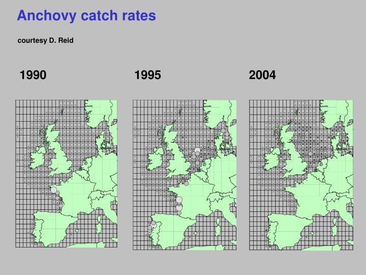 Anchovy catch rates