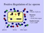 positive regulation of lac operon
