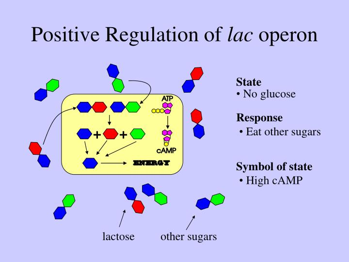 Positive Regulation of