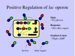 positive regulation of lac operon1