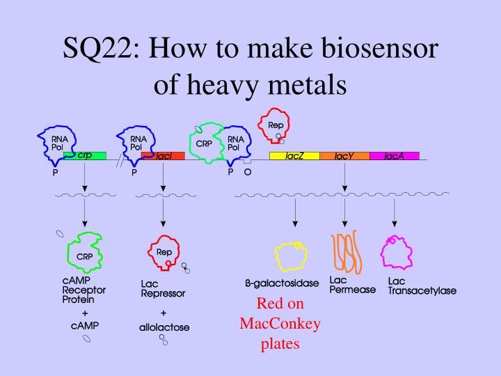 SQ22: How to make biosensor