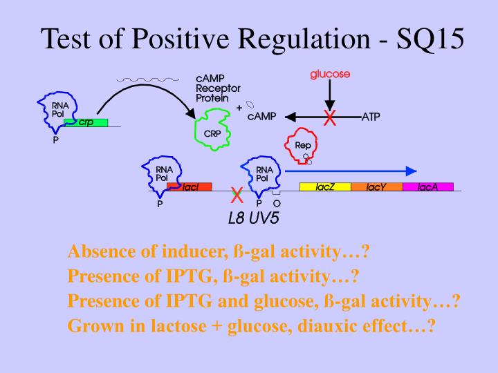 Test of Positive Regulation - SQ15