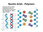 nucleic acids polymers