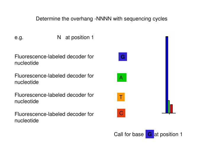 Determine the overhang -NNNN with sequencing cycles