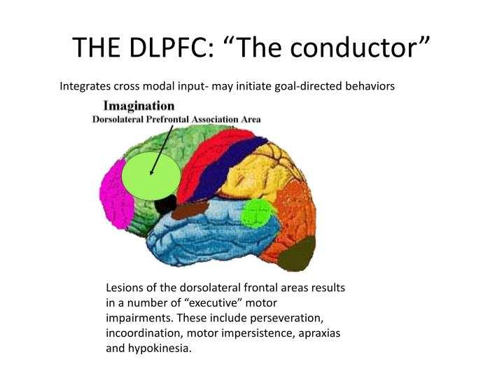 """THE DLPFC: """"The conductor"""""""
