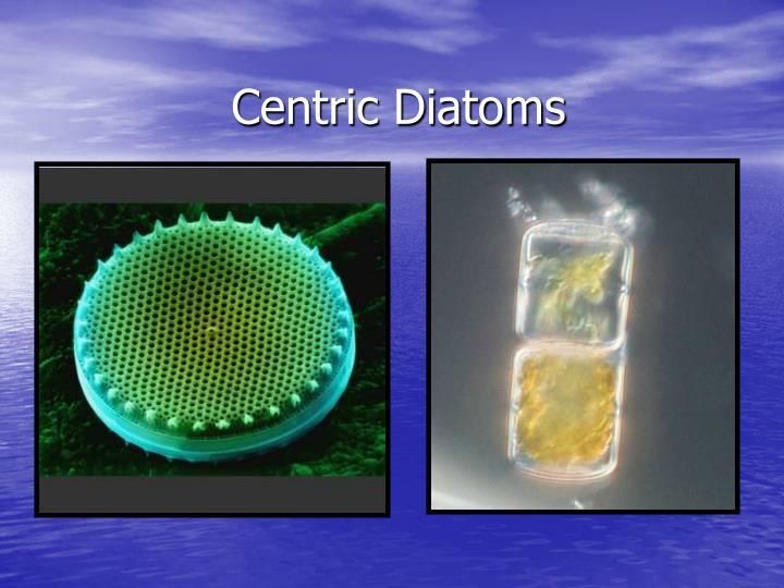Centric Diatoms