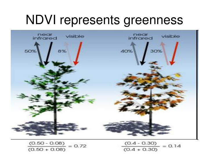 NDVI represents greenness