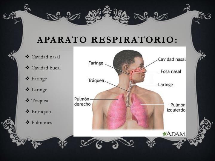 APARATO