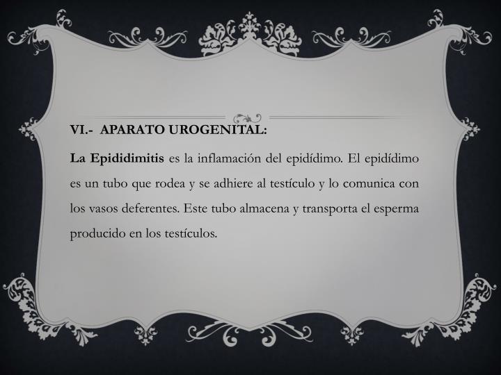 VI.-  APARATO UROGENITAL: