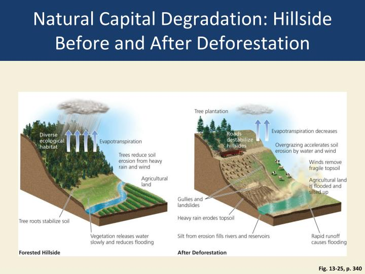 Natural Capital Degradation: Hillside Before and After Deforestation