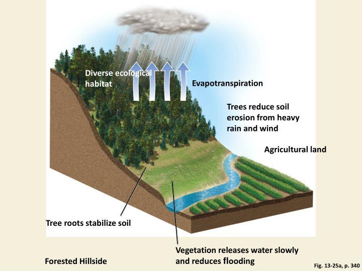 Diverse ecological habitat