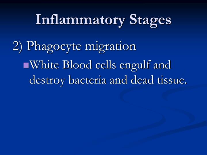 Inflammatory Stages