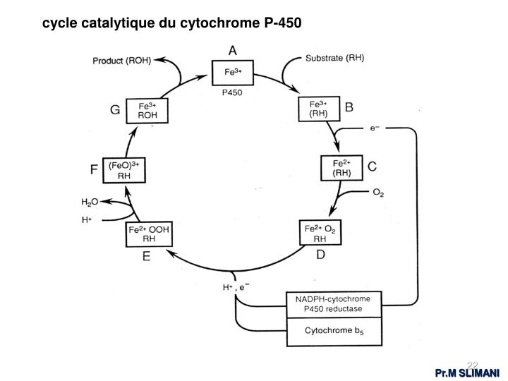 cycle catalytique du cytochrome P-450