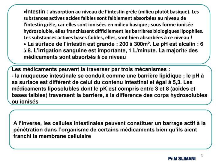 Intestin :