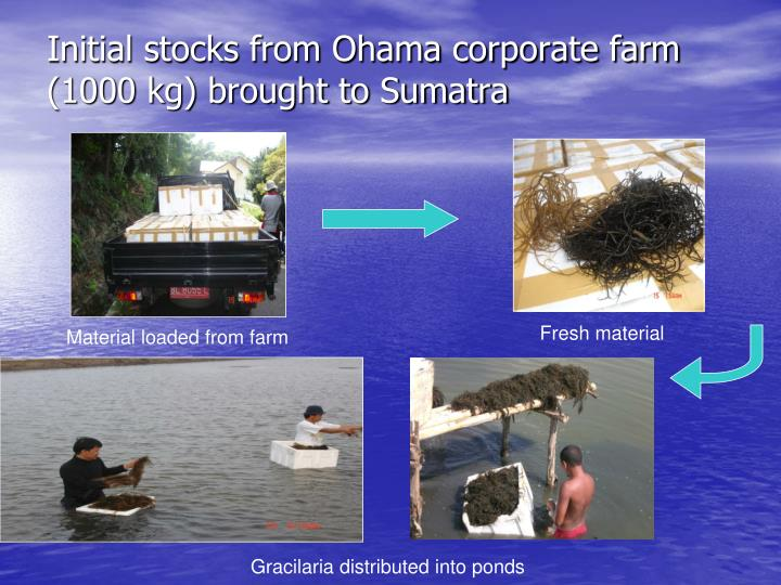 Initial stocks from Ohama corporate farm (1000 kg) brought to Sumatra