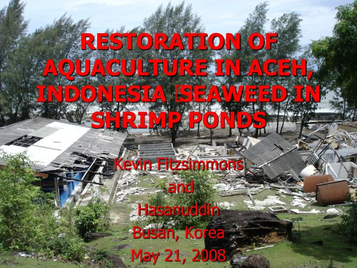 Restoration of aquaculture in aceh indonesia seaweed in shrimp ponds