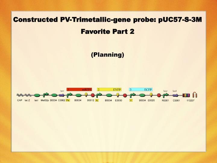 Constructed PV-Trimetallic-gene probe: pUC57-S-3M