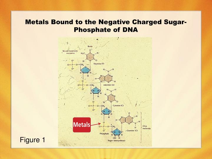Metals Bound to the Negative Charged Sugar-Phosphate of DNA