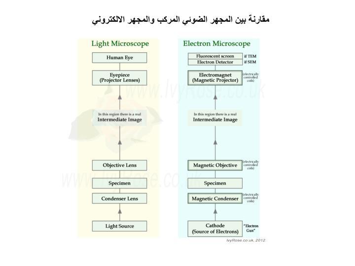 مقارنة بين المجهر الضوئي المركب والمجهر الالكتروني