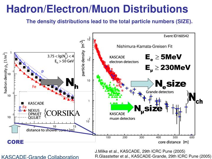 Hadron/Electron/Muon Distributions