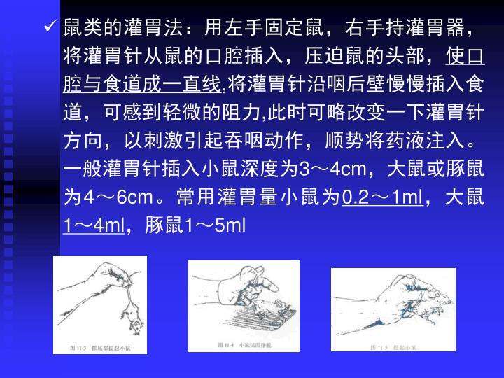 鼠类的灌胃法:用左手固定鼠,右手持灌胃器,将灌胃针从鼠的口腔插入,压迫鼠的头部,