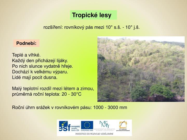 Tropické lesy