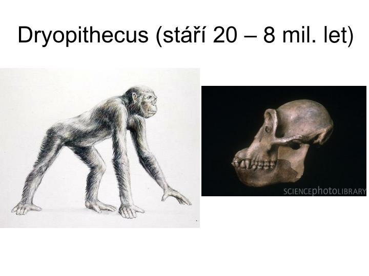Dryopithecus (stáří 20 – 8 mil. let)