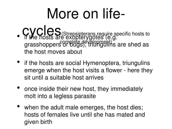 More on life-cycles