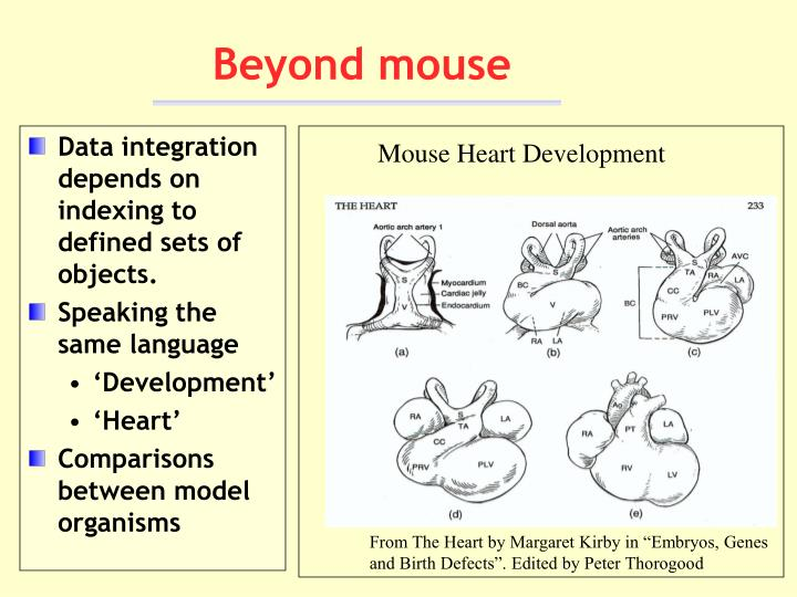 Mouse Heart Development