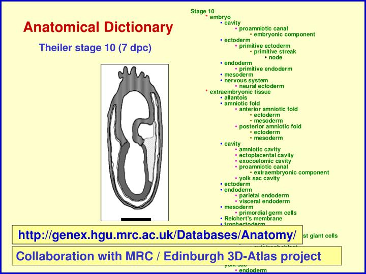 Anatomical Dictionary