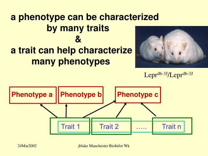 a phenotype can be characterized