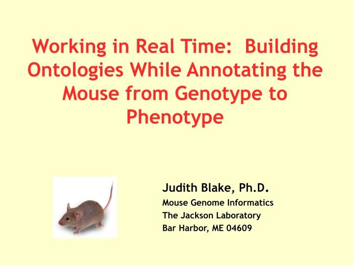Working in real time building ontologies while annotating the mouse from genotype to phenotype